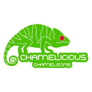 chamelicious_chameleons_B