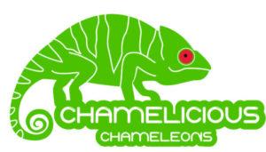 cropped-chamelicious_chameleons_B.jpg